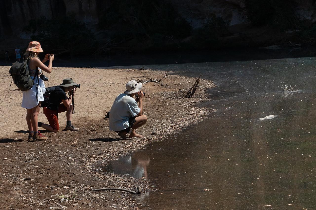 Crocodile paparazzi at Windjana Gorge